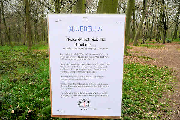 wp bluebells notice 090323 90354art